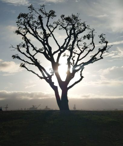 Julian Bizet - Tree