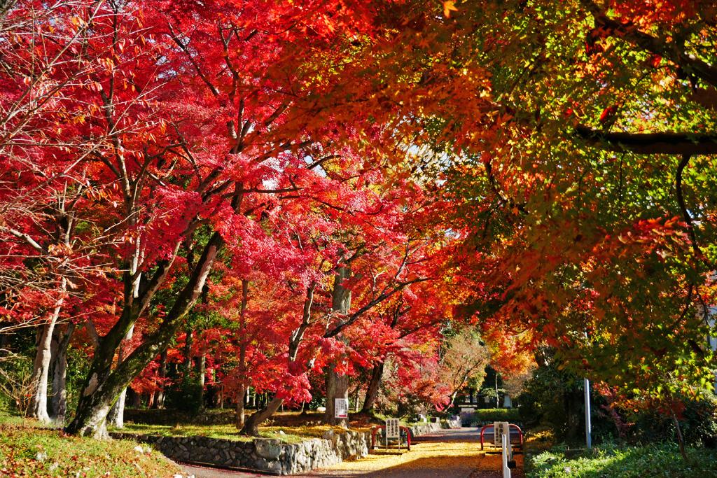 鷺森神社の紅葉写真素材