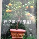 鉢で育てる果樹1