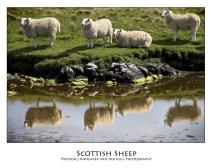 wpid-PhotoA.nl_Scotland_11.jpg