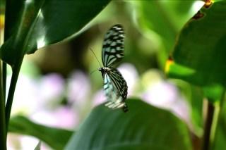 蝶の楽園85_017