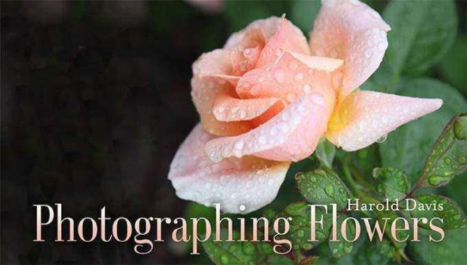 Flowers_photography_tips #photoandtips