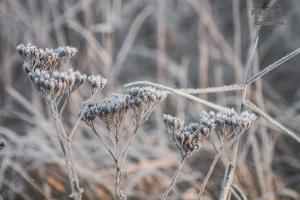 fotograf-Szczecin-00014