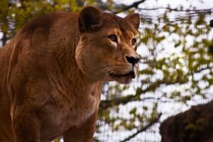 zaciekawiona-lwica-fotograf-swinoujscie