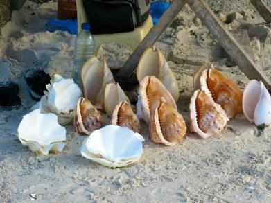 Alona Beach 13