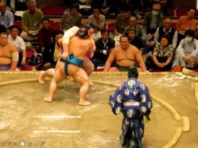 Sumo25