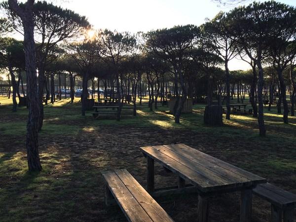 The Acebuche visitor area