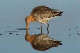 This is a classic shorebird shot, and probably one that exists in a million versions already - but I like it all the same.