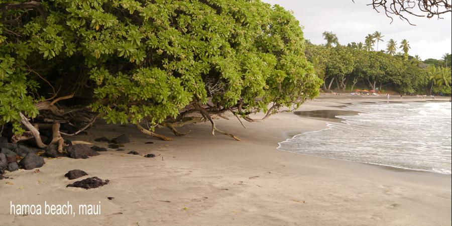 D-beaches152
