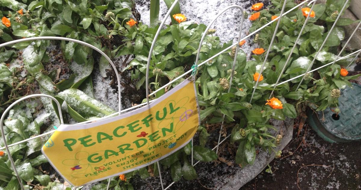 PB51-garden