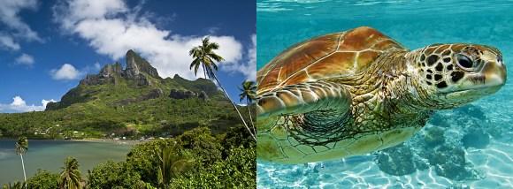 Tahiti_Rom Welborn