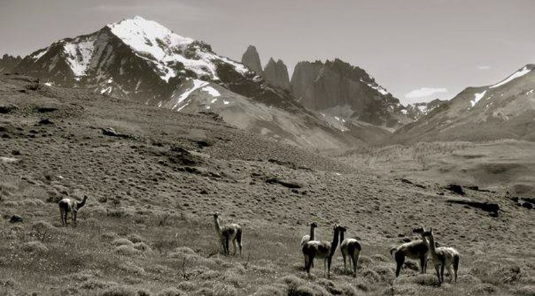 Rob-Noonan-Patagonia-llamas-adj