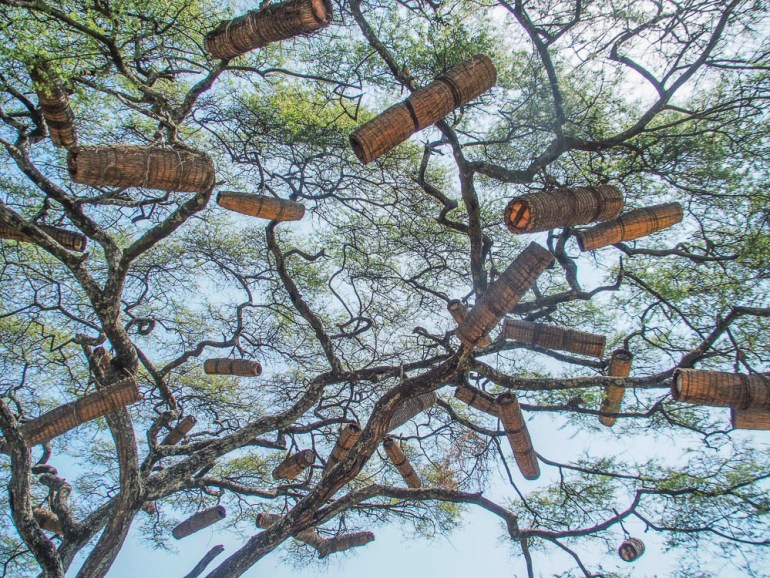 bee hives in tree