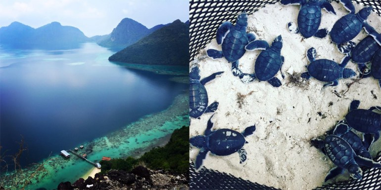 from-Bhoey-Duland-intoTun-Sakaran-Sabah-hatchling-sea-turtles