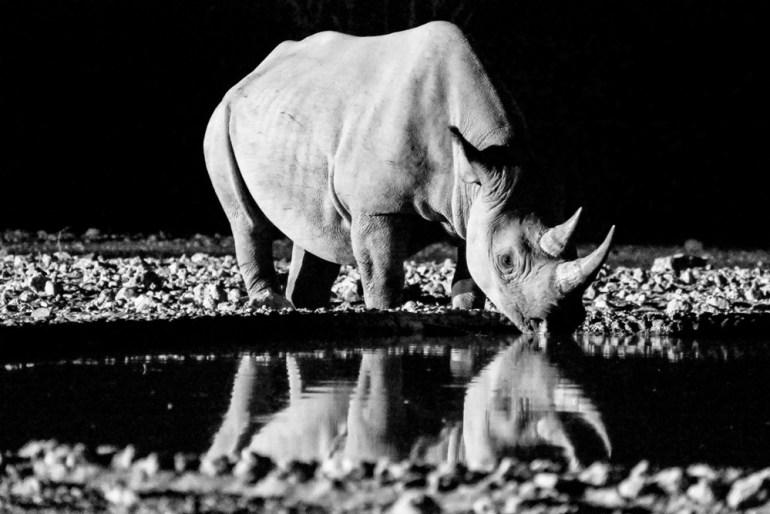 Randy-Roig-pax-ok-Rhino---Etosha-14