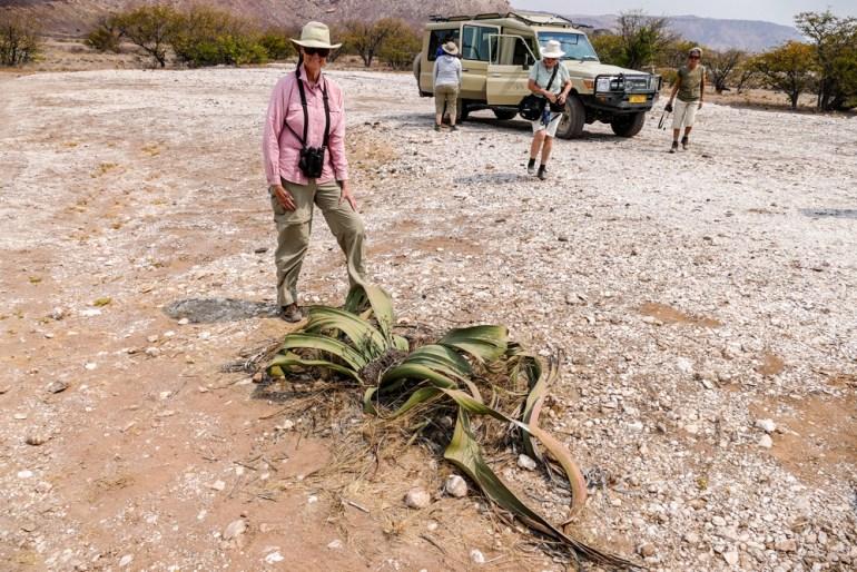 Welwitschia---Damaraland-1