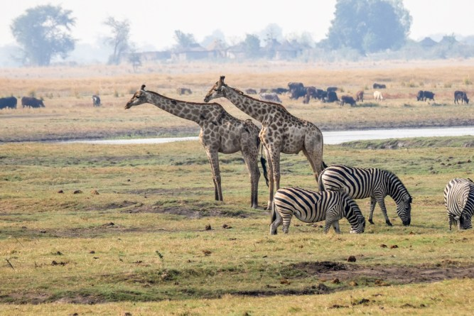 Mixed-Group-Scene—Chobe