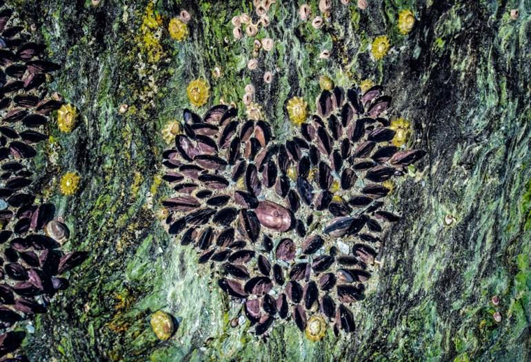 13-Mussel-colonies,-Tierra-del-Fuego-National-Park-crop