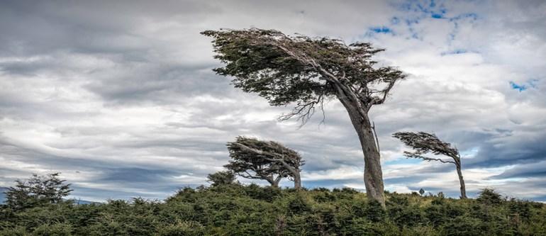 33-Wind-Blown-Trees,-Harberton-Farm-crop