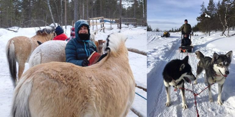 ponies-snow-dogs