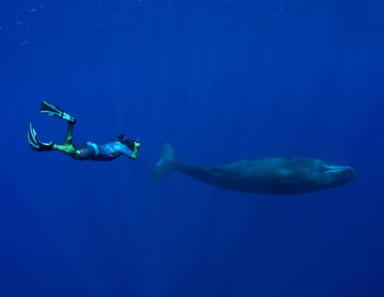 Ron Leidich and a sperm whale in Palau. Photo by Thomas Beachtold