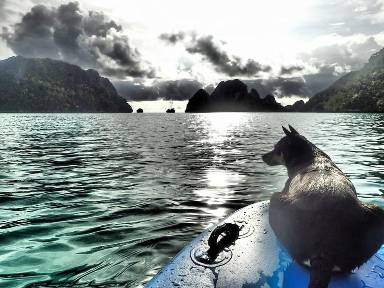 Raja Ampat kayak and dog