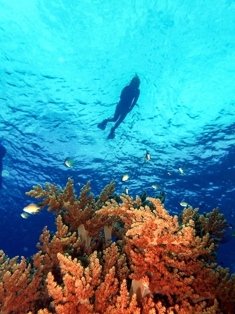 Raja Ampat Diver Coral Reef