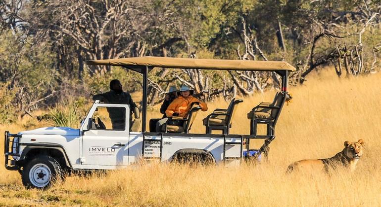 lionness and safari vehicle zimbabwe