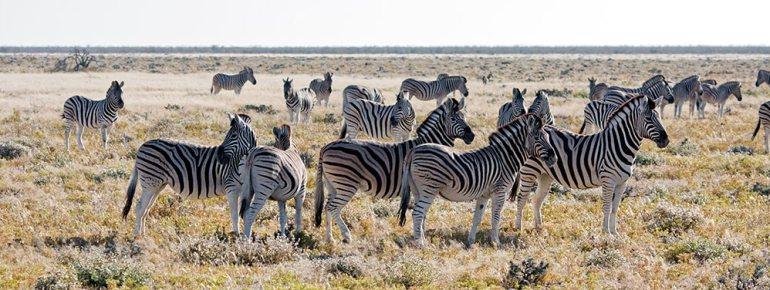Wildlife Etosha Namibia