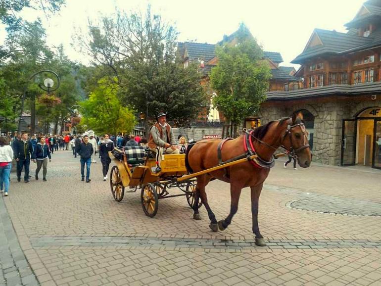 zakopane poland horse carriage