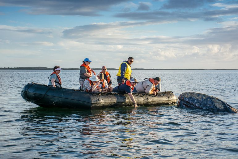 people on a raft near a grey whale