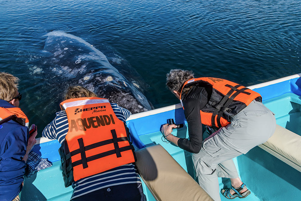 Whale encounter near Lopez Mateos, Baja