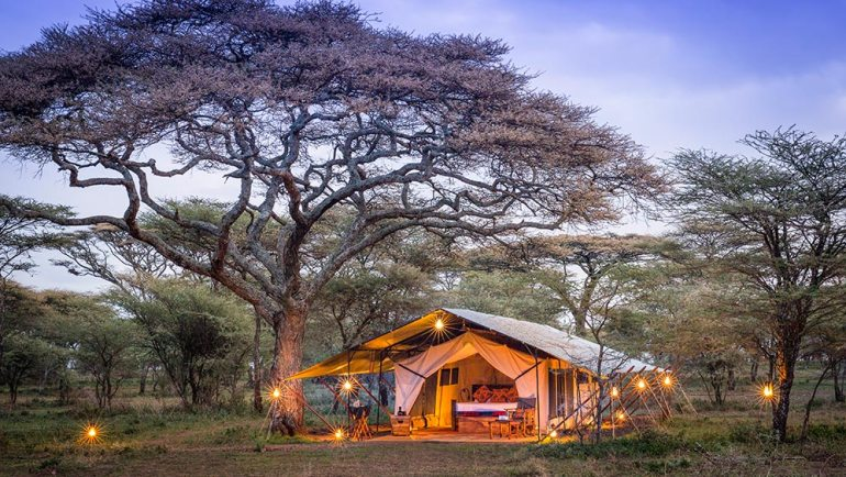 serengeti wildlife safari tent