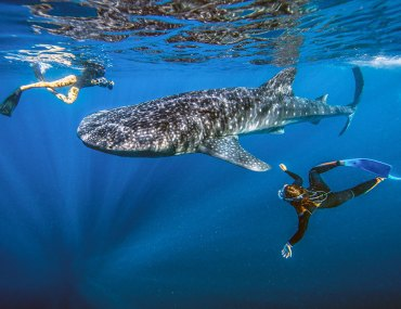 Baja-whale-shark-swimmers