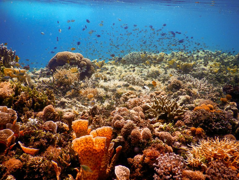 underwater coral colony in Raja Ampat