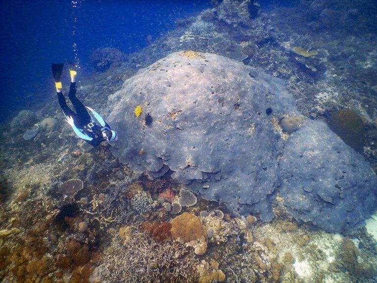 person diving in Raja Ampat