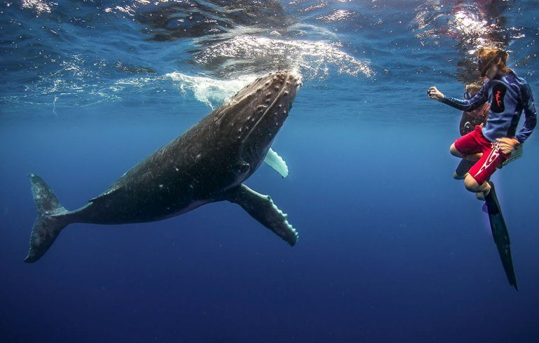 humpback whales in tonga, best place to travel in september
