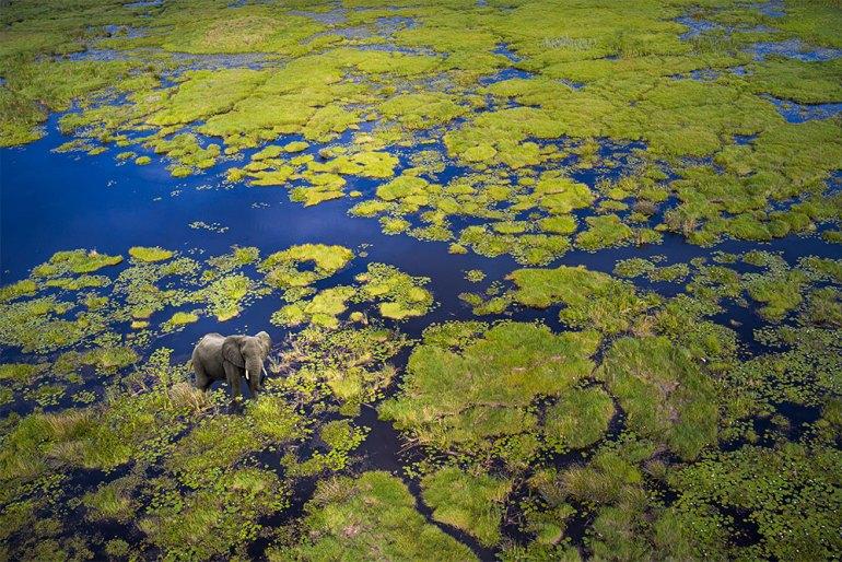 Botswana-Okavango-Delta-Elephant