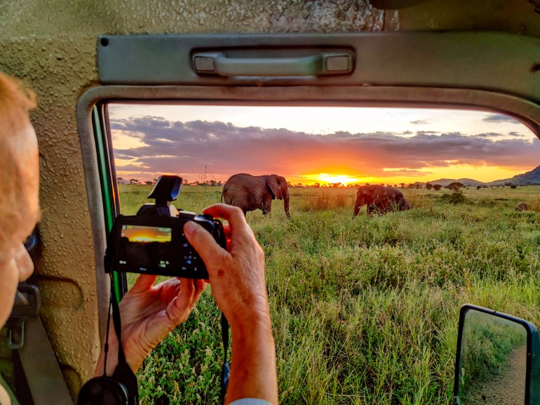 watching a herd of elephant at sunset in the serengeti