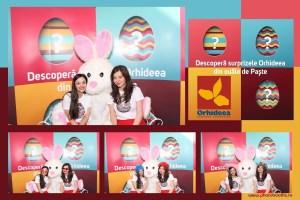 Protejat: 03-11 Aprilie 2015 – Eveniment Orhideea Mall – Bucuresti