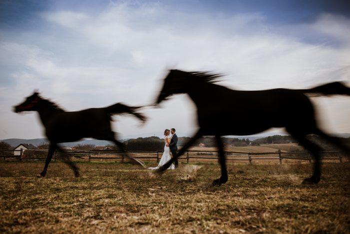 horses running wedding TPOM