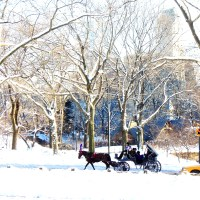 Central Park By Winter