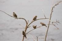 The Sparrow Bunch