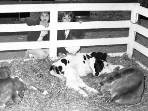4-H moments at the Columbia County Fair 1976 (4)
