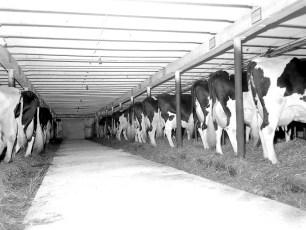 Grant Langdon Dairy Farm Copake 1963 (1)