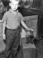 Jack Bohnsack petting Dow Hover Jr.'s pet woodchuck 1960