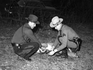 NYS Trooper Sgt. F. Hilfrank & Encon Officer with injured deer 1953 (3)