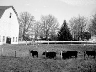 Gene Sarazen Farm G'town 1949