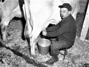 Kukon Dairy Farm G'town 1953 (4)