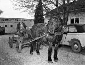 Ed Hardrick arriving at polling place to vote by horse & wagon G'town 1957
